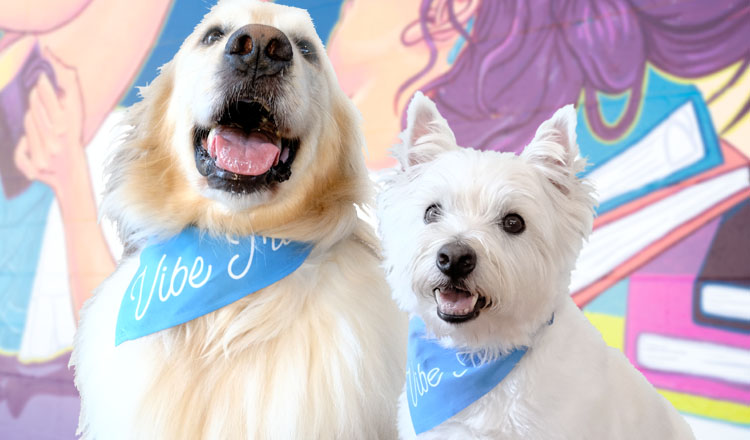 Erica Mau's Dogs