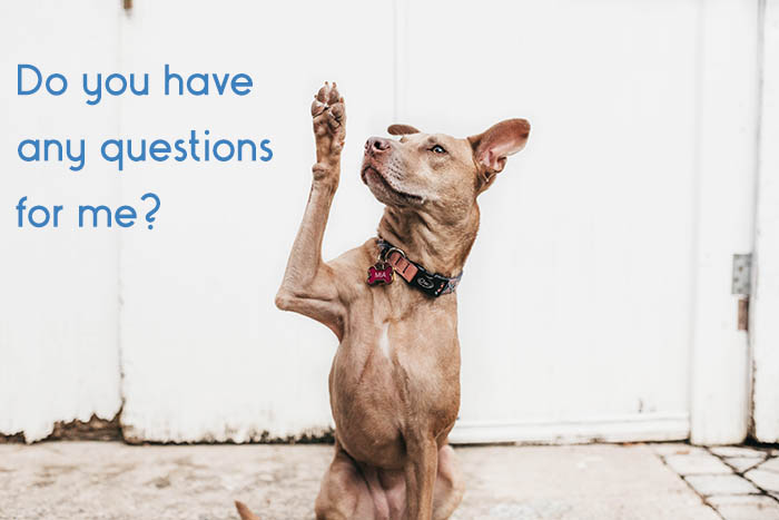 dog raising his paw to ask a question