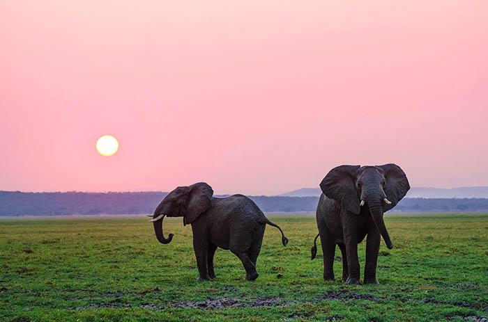 elephants against a pink sky
