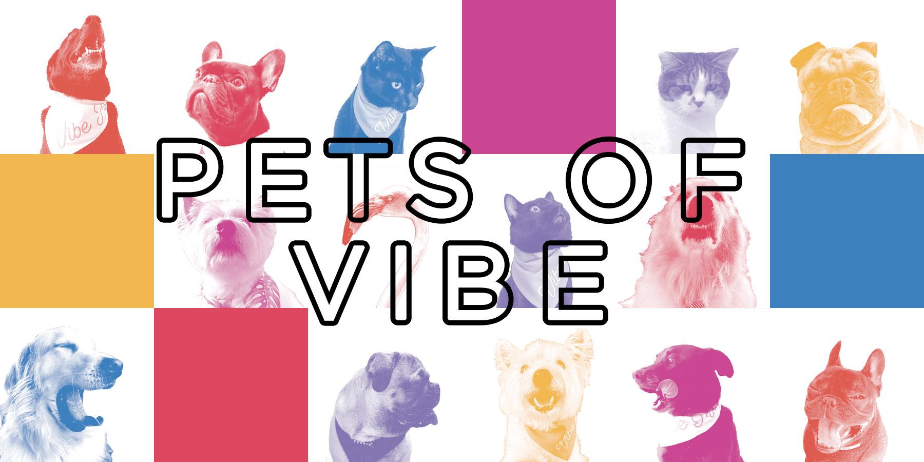 Pets of Vibe